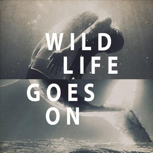27568_Wildlifegoeson_A